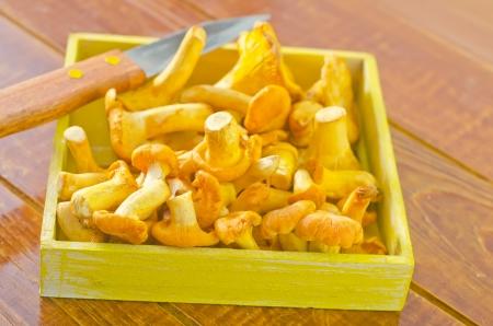 mushrooms Stock Photo - 21775071