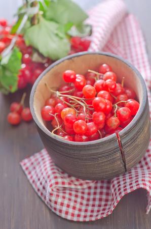guelder rose berry: viburnum