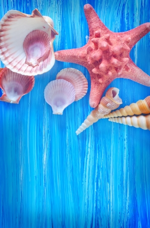 sea shells on blue board photo