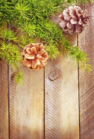 pinecones photo