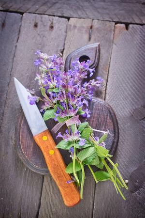 herbary: oregano