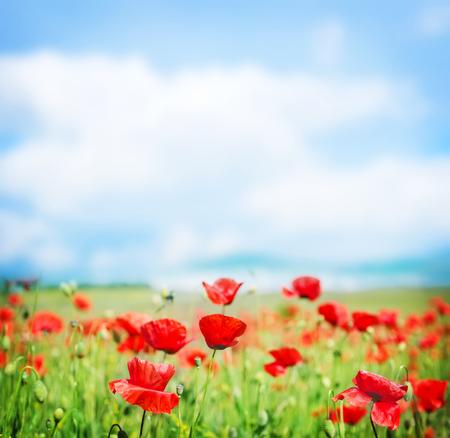 poppy field and blue sky in Crimea photo
