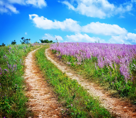 nature Standard-Bild
