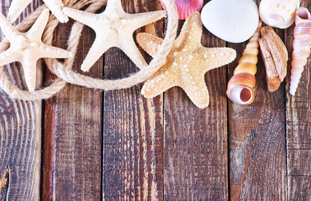 echinoderm: color sea shells and starfish, summer background