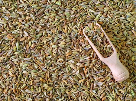 foeniculum vulgare: fennel Stock Photo