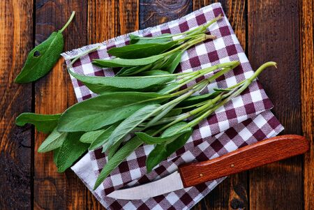 fresh sage on napkin and on a table Stock Photo