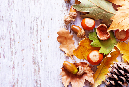 cobnut: autumn background, autumn nuts and leaves on a table