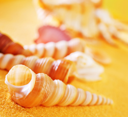 summer background, yellow sand and sea shells Stock Photo