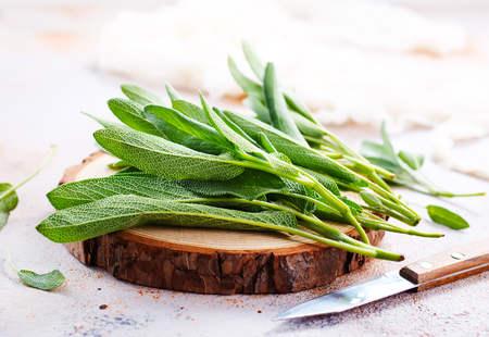 Fresh aromatic sage on the table, stock photo