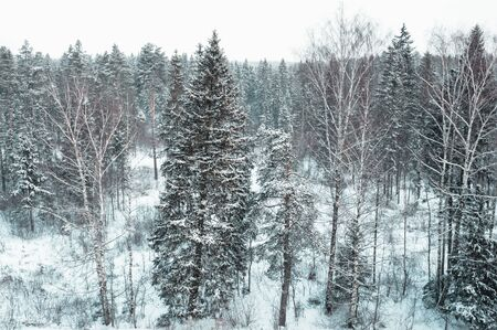 Winter landscape with coniferous and deciduous forest
