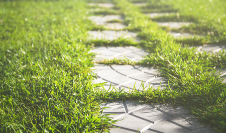 Pathway maden from paving stone in garden with beautiful lawn Stok Fotoğraf - 98469635