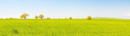 Panoramic scenery of lonely trees standing on a plain