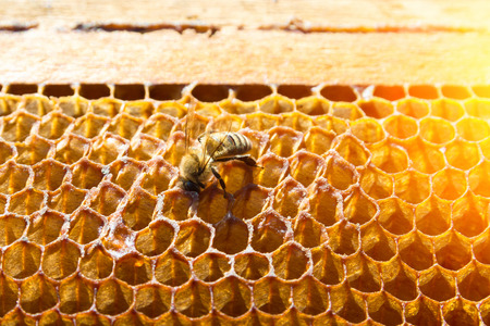 Working bee in a honeycomb close-up macro image Imagens - 100991633