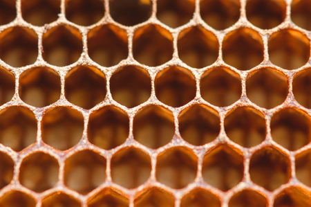 Honeycomb close up macro background abstract image