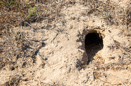 Hole of an unknown animal in the steppe on the ground Stockfoto