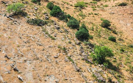 Trees on a hillside with deposits of rock