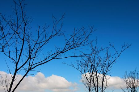 Blue sky, white clouds and trees photo