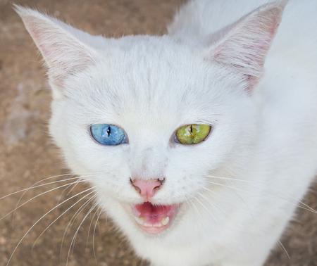 cat eye: White Cat Eye Color Stock Photo