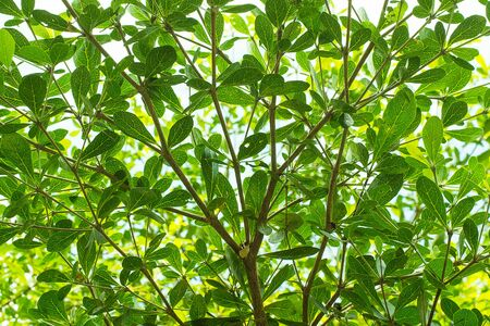 twigs: Twigs, leaves,