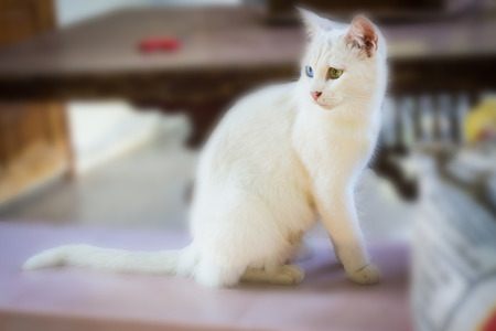favorite colour: White Cat Eye Color Stock Photo