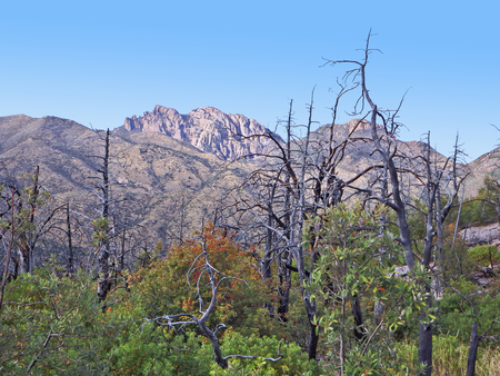 Burned trees in Chiricahua National Monument in southeast Arizona.