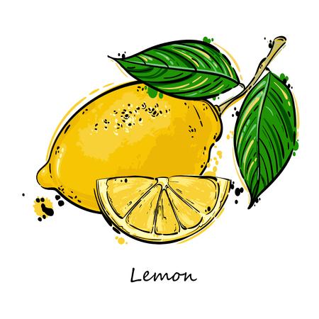 ベクトル レモンの抽象的なイラスト。はがき、メニューのバナー、ポスター、広告および他のあなたの設計のための分離のセットです。