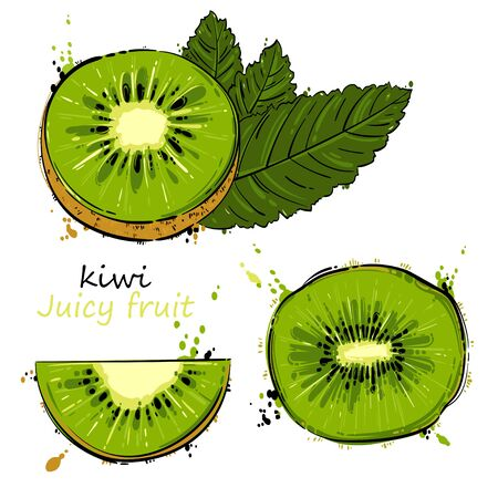 Vector abstract illustration with kiwi. An isolated set for your design of postcard, menu, banner, poster, advertisement and other. Ilustrace