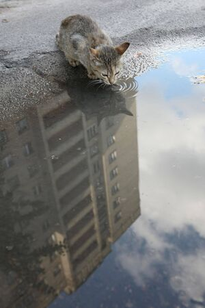 Homeless cat to drink water from a puddle photo