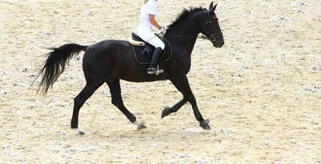 runing: runing dressage horse