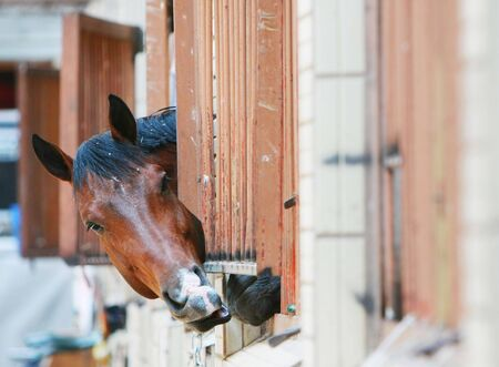 Horse put out her head of a bars Stock Photo - 4553715