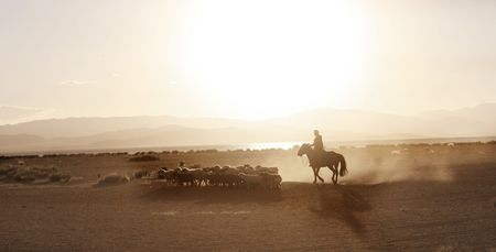 herding: Mongolian boy drove herd of sheeps Stock Photo