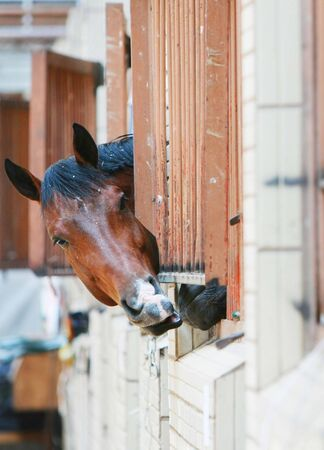 Horse put out her head of a bars Stock Photo - 4972636