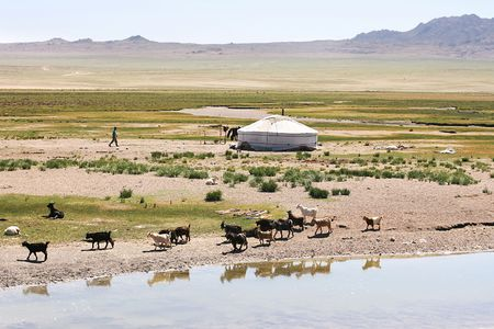Traditional mongolian landscape. Herd of goats on the  lake bank photo