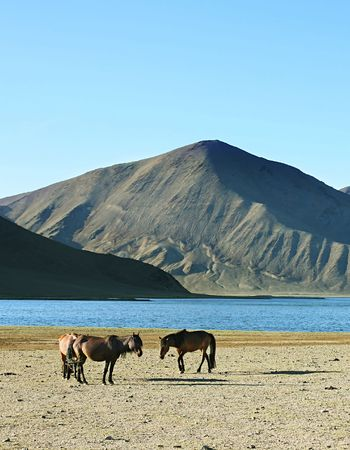 herd of horses in front of lake and mountains. Mongolia Stock Photo - 5049443