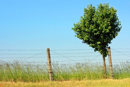 countrysides: lonely tree under the barbed wire
