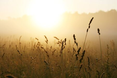 Misty sunrise over grass