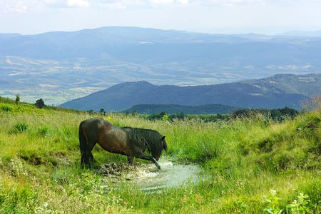 horse splashing in a puddle in the Carpathian Mountains Stock Photo - 5243493
