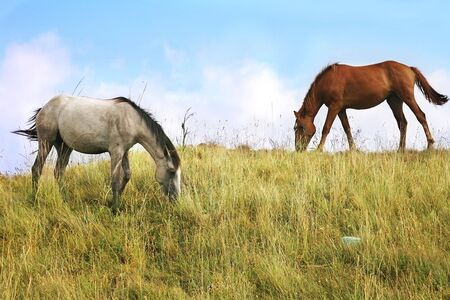 Two horses grazing in a pasture photo