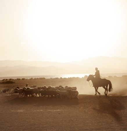 beautiful horse: Mongolian boy drove herd of sheeps Stock Photo
