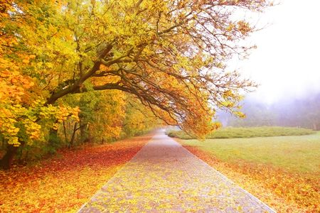 road autumnal: The road through the autumnal park in the morning