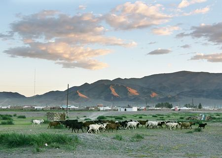 nomadism: Herd of goats  in the mongolian village at sunset