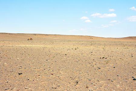 mongolia horse: Horse in a desert Gobi. Mongolia