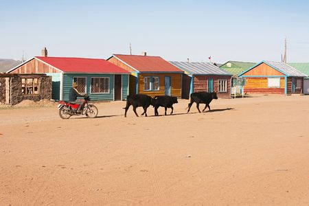 Traditional mongolian village in the sunshine day photo