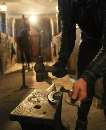 attach: farrier prepares to attach horseshoe to hoof