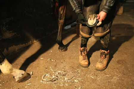 pinchers: farrier prepares to attach horseshoe to hoof