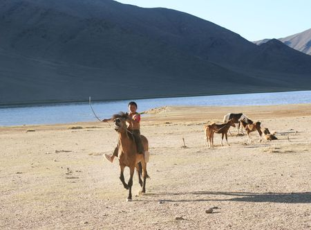 nomads: Mongolian boy racing on a horse in front of nomads tent- August 06, 2008. Mongolia