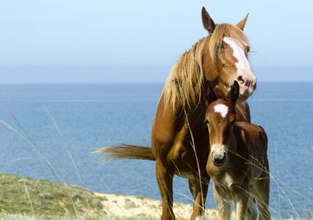 Mare and foal in front of the sea. Crimea. Ukraine