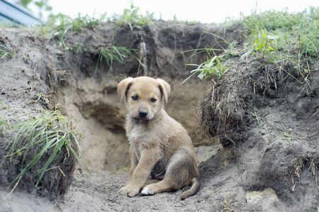 Homeless puppy near the hole photo