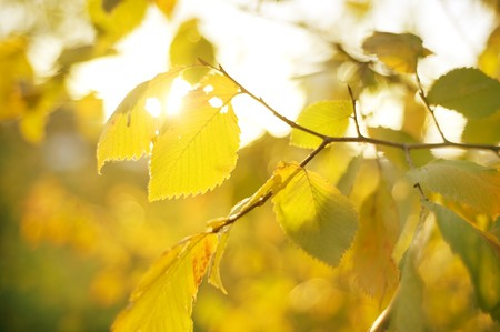 Autumn Leaves in the sunshine day photo