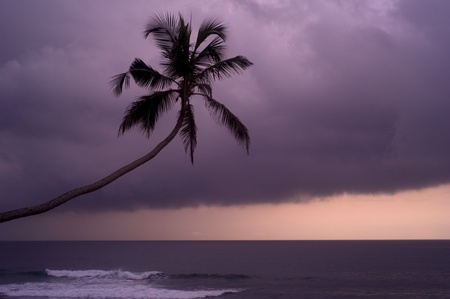 Palm in front of rainy clouds at sunset. Sri Lanka photo
